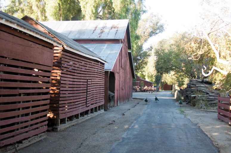 Rustic Barn with Country Lane at Paddison Farm