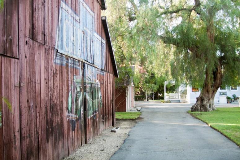 Barn and Mature Tree along a Country Lane at Paddison Farm