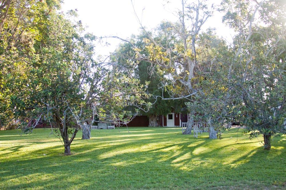 Paddison Farm-5273