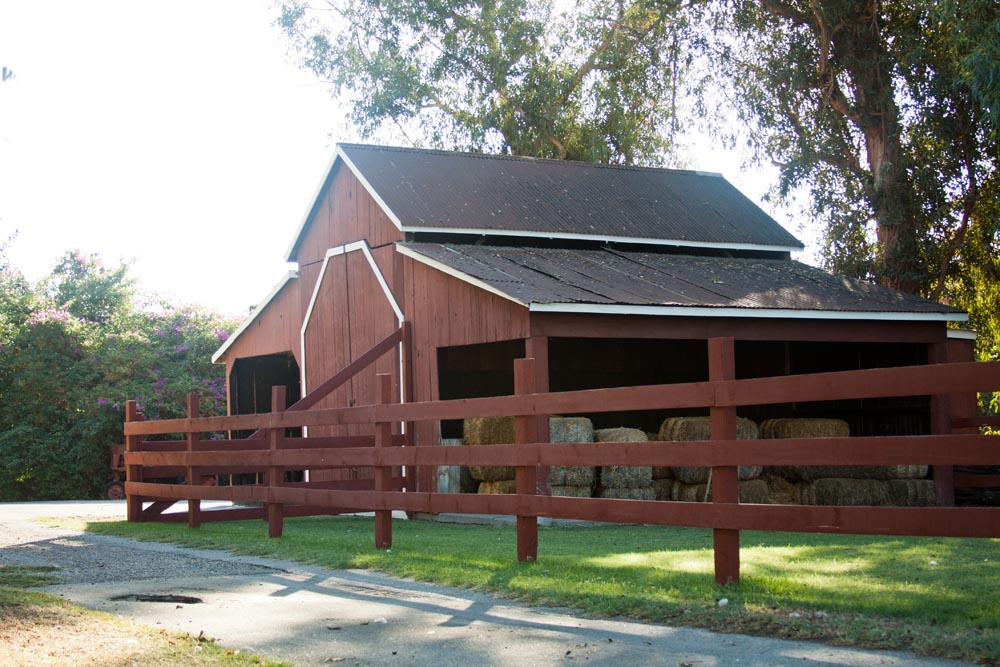 Paddison Farm-5345