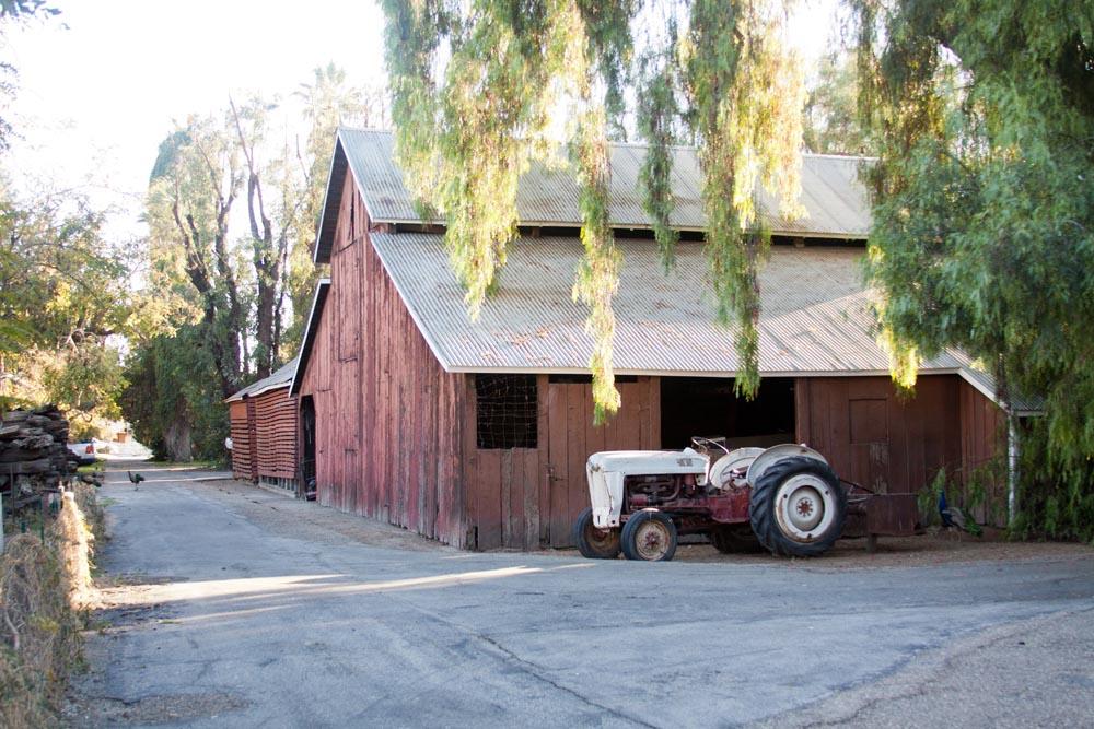 Paddison Farm-5389